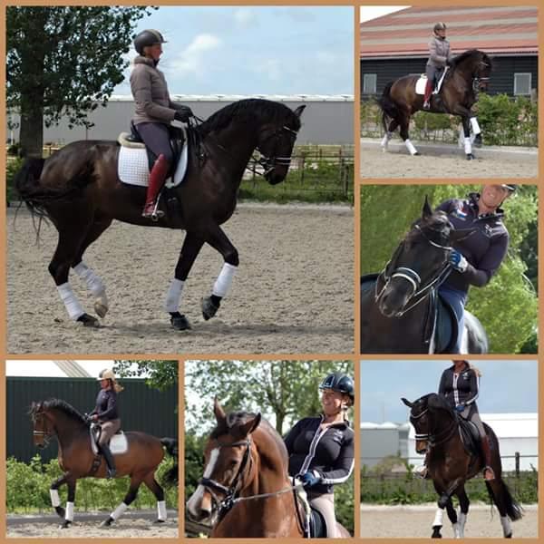 Cursus paardenfotografie